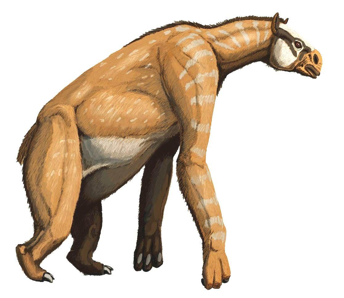 Quaternary Animals