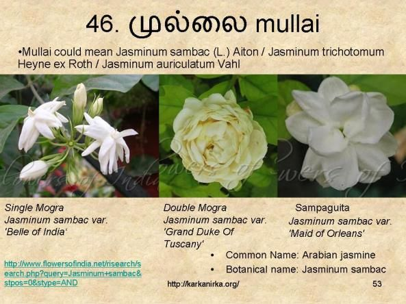 99 Tamil Flowers Kurunjipaatu Flowers 41 50 Indoor Flowering Plants Indian Flowers Flower Names