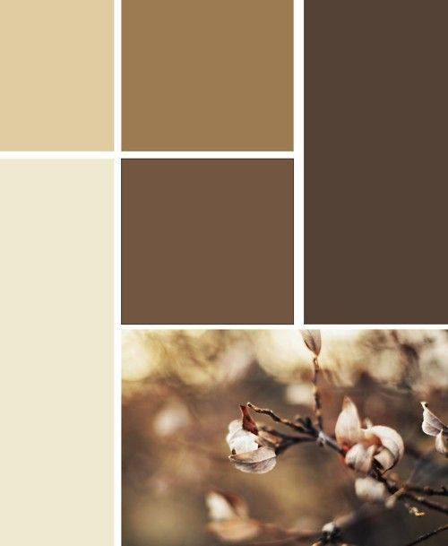 Brown Color Scheme For A Living Room