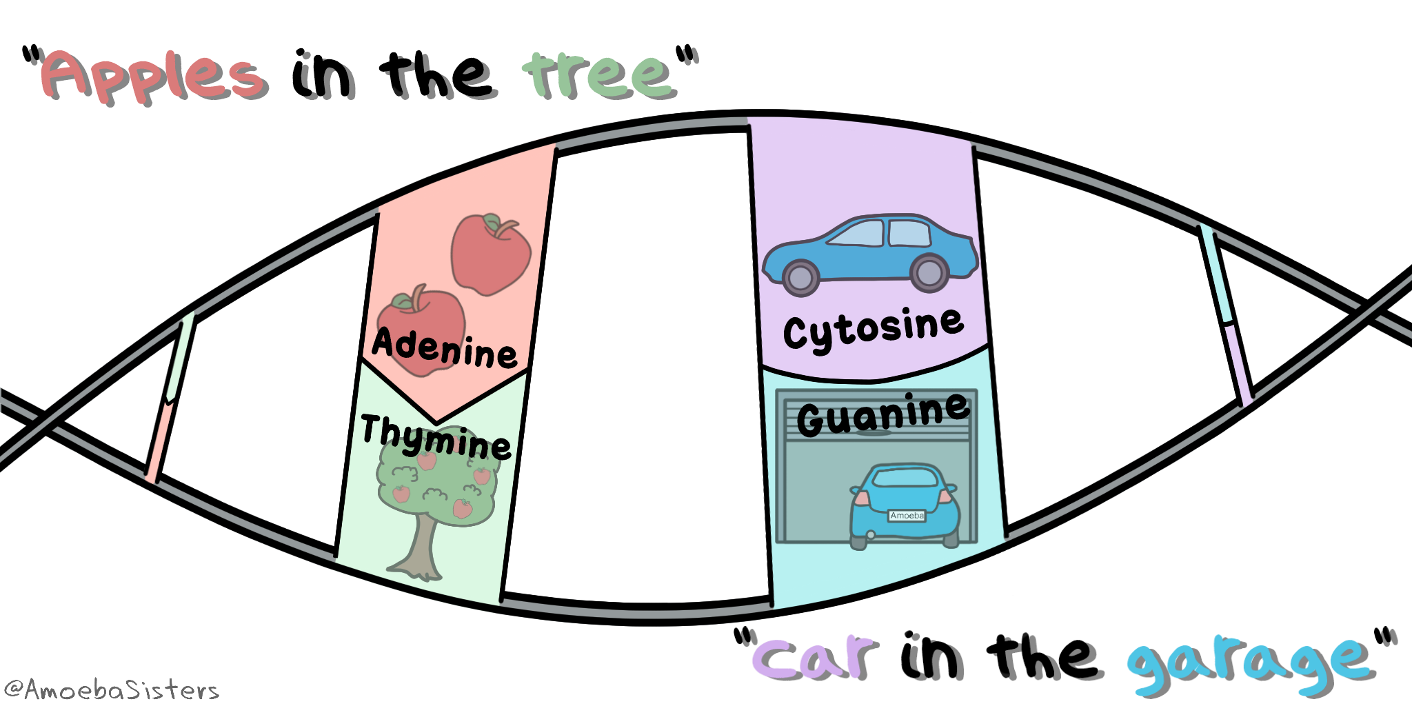 a mnemonic device to remember the dna bases a goes with t c goes