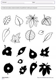 Librairie Interactive Associer Un Objet Et Son Ombre Creations De Maternelle Coloriage Grande Section Theme Automne