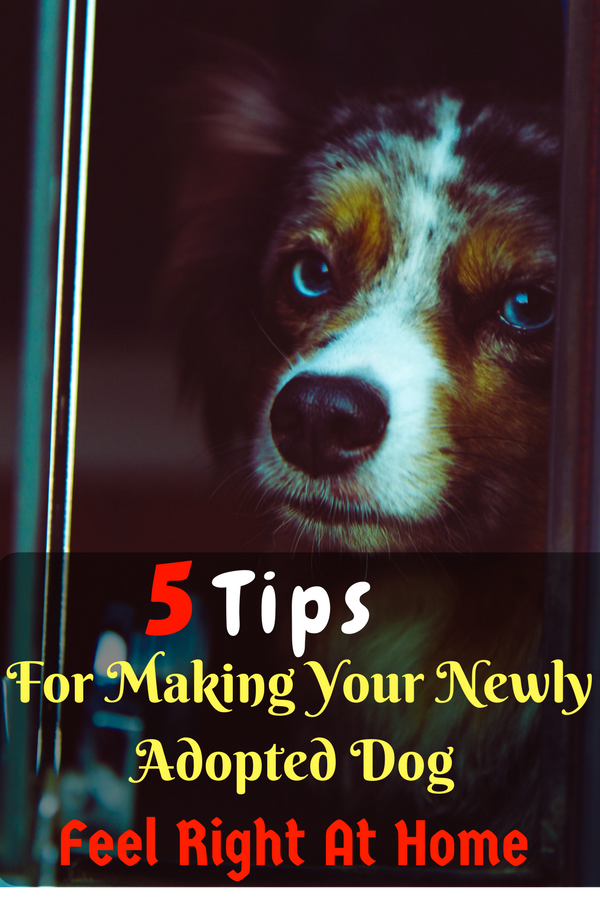 Once You Ve Found Out If You Re Ready To Bring A Dog Home Read On
