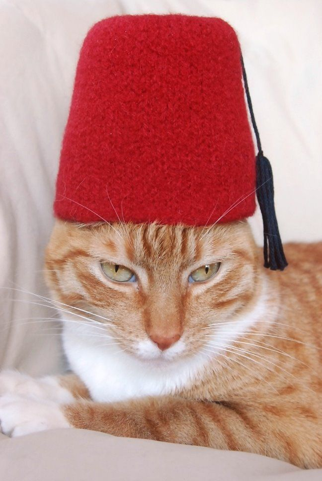 Delightful Cat With A Frickinu0027 Fez. What A Sick Cunt.