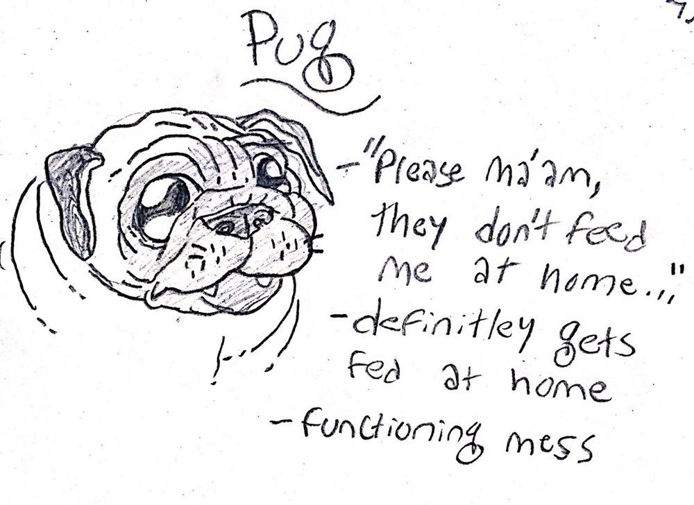 The Hilarious Cartoon Guide To Traits Of Big And Small Dogs Pugs