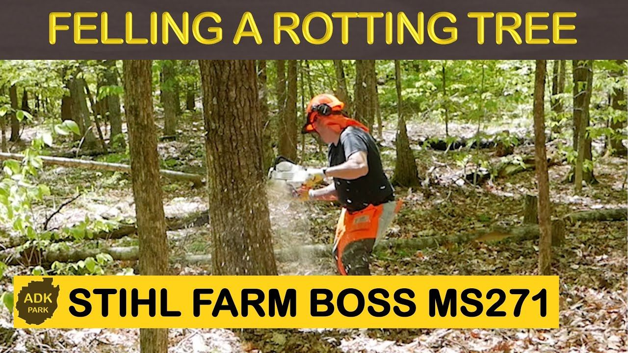 FELLING A ROTTING TREE WITH STIHL FARM BOSS 271 in 2020