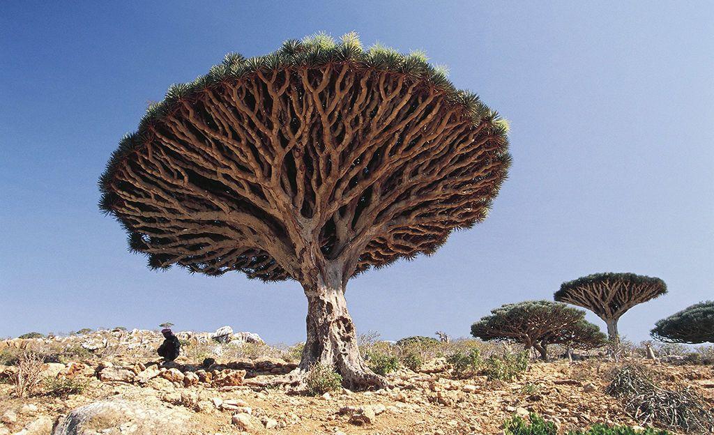 Eddie Gustin ihastui matkallaan Jemenin kulttuuriin ja luontoon, varsinkin Socotraan josta kuva on. Tulenaran tilanteen vuoksi Jemeniin ei kuitenkaan juuri nyt suositella matkustamista, ja esimerkiksi maassa oleskelevia suomalaisia on kehotettu poistuman sieltä.