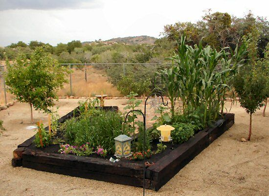 Raised Vegetable Garden Fruit Orchard In Yarnell Arizona