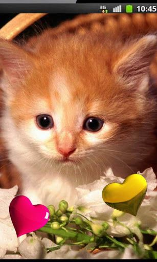 Free Live Wallpaper Interactivity Personalisation Br Cute Kittens Hd Live Wallpaper This Collection Of High Quality Kittens Cutest Live Wallpapers Kittens