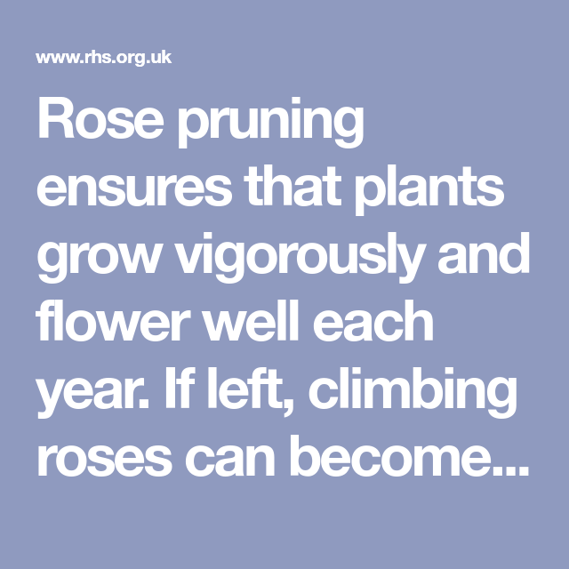 Rose Pruning Ensures That Plants Grow Vigorously And Flower Well Each Year If Left Climbing Roses Can Become A Tangled Mess Of Bran Climbing Roses Prune Rose