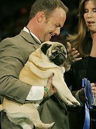 My Dog Recaps The Westminster Dog Show Westminster Dog Show