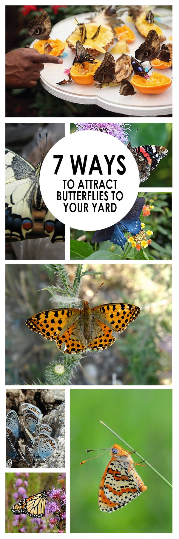 7 ways to attract butterflies to your yard yards butterfly and