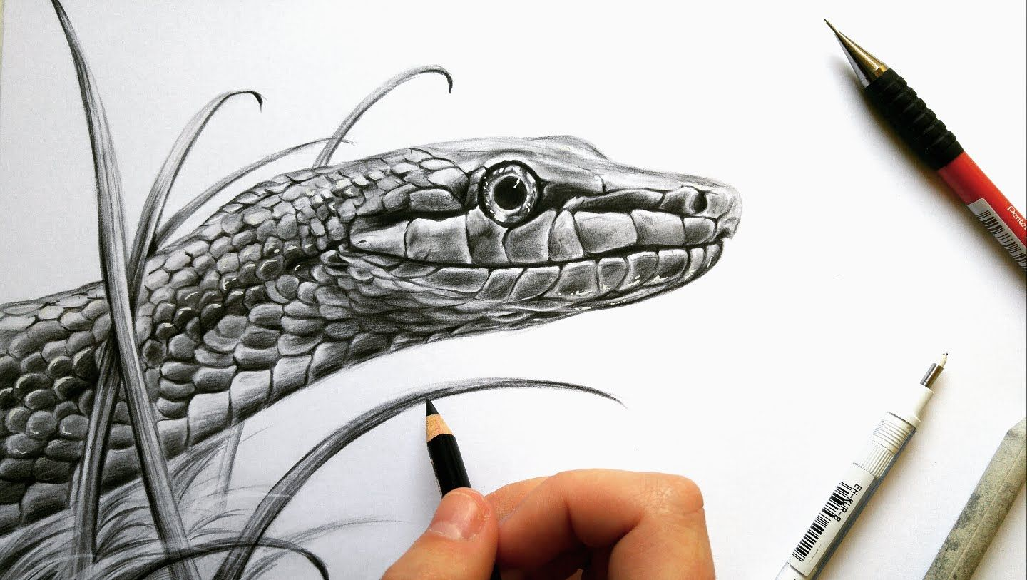Drawing A Realistic Snake In Graphite Leontine Van Vliet