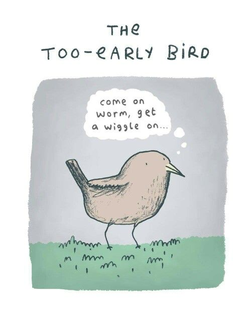 The Too-Early Bird by Sophie Corrigan Illustration