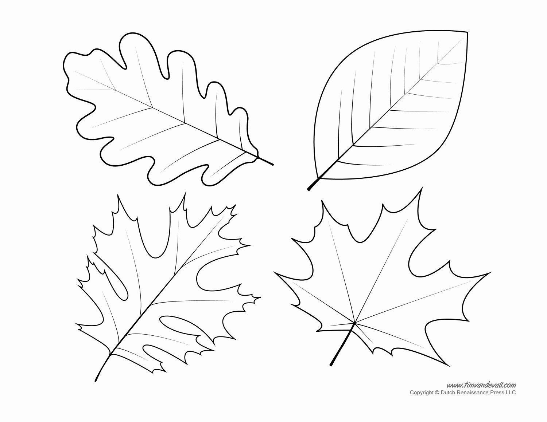 Printable Leaf Coloring Pages Fresh Leaf Templates Leaf Coloring Pages For Leaf Template Printable Fall Leaves Coloring Pages Leaves Template Free Printable