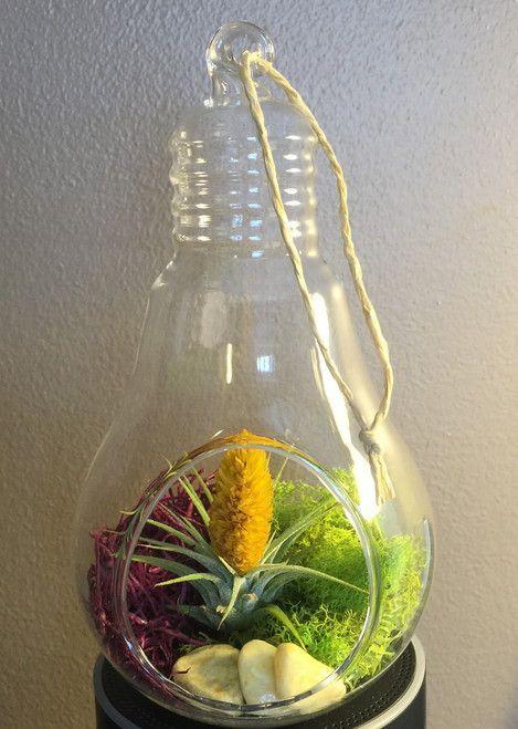 Light Of Life Hanging Glass Light Bulb Terrarium With Living Air