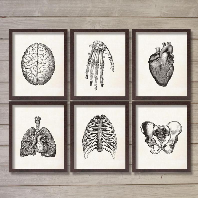 Anatomía humana Vintage Descarga instantánea imprimible arte de la pared - Conjunto de 6 8x10 - Doctor Oficina Hospital Decor Medicina Estudiante Regalo Best Seller