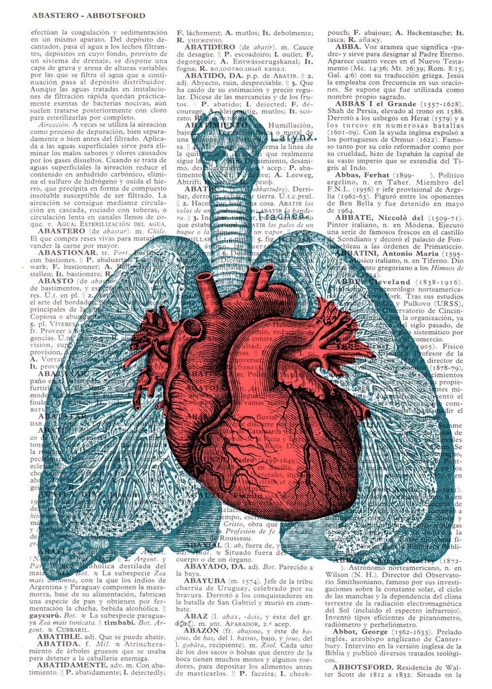 Heart And Lungs Anatomy Book Page Print On Vintage Encyclopedic Page