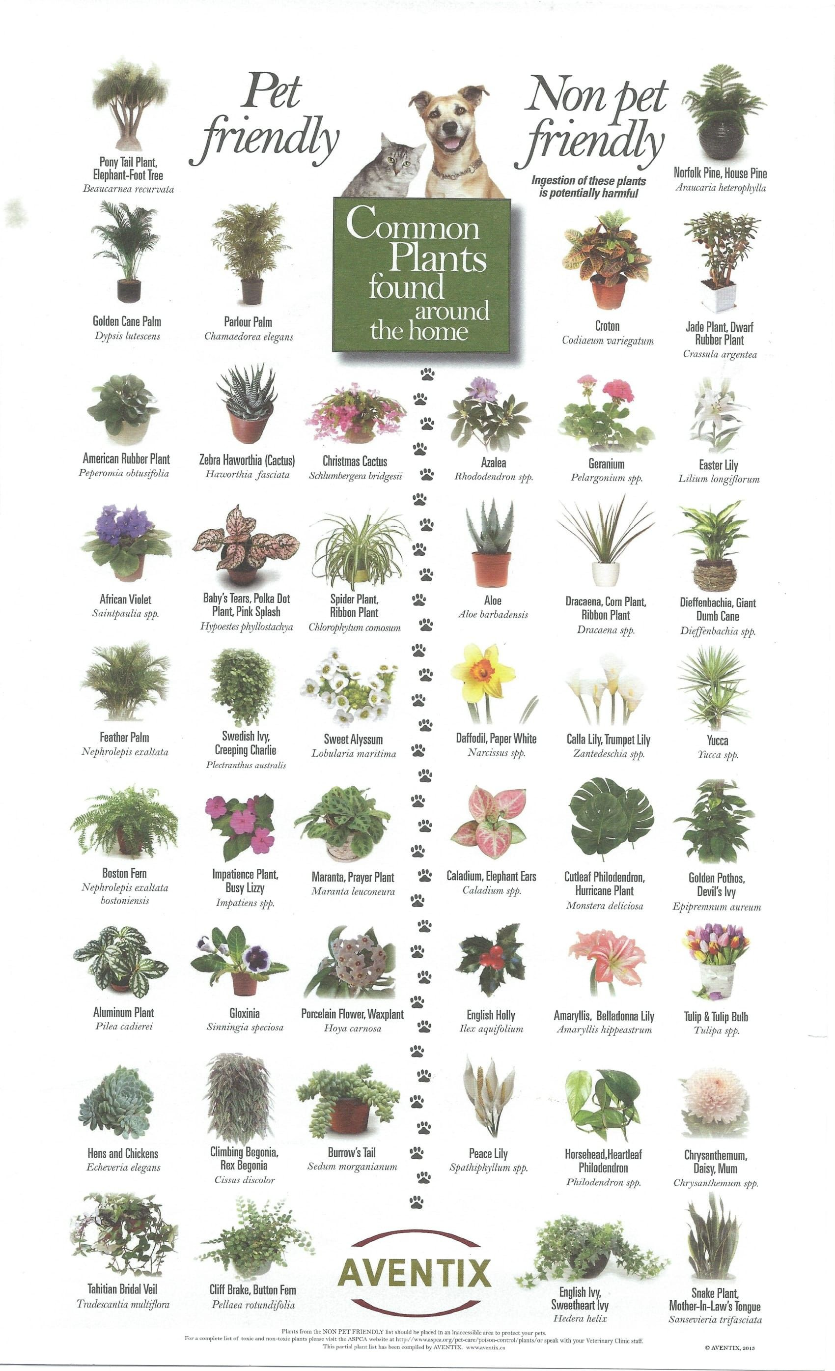 Pet Friendly and Not So Pet Friendly Plants | Animal Love ...