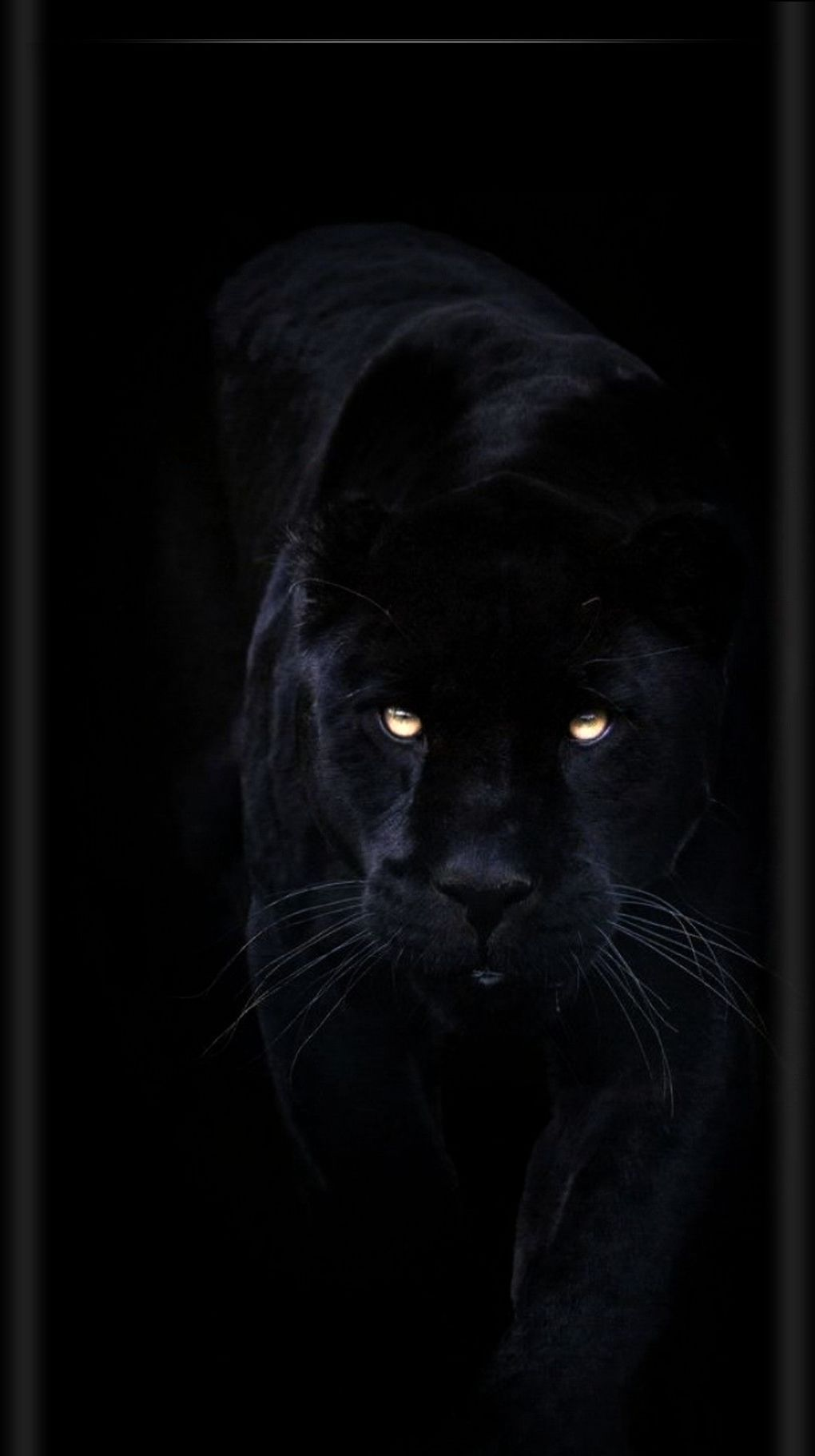 The Complete Home Guide To Herbs Natural Healing And Nutrition With Images Black Animals Animals Black Panther Cat