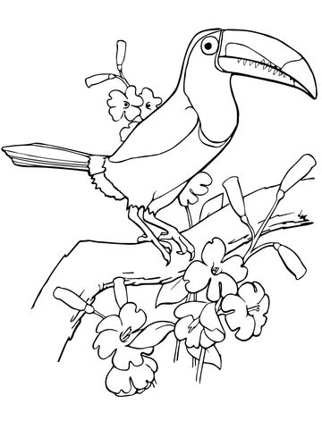 Keel Billed Toucan Coloring Page Dessin Peinture Animaux