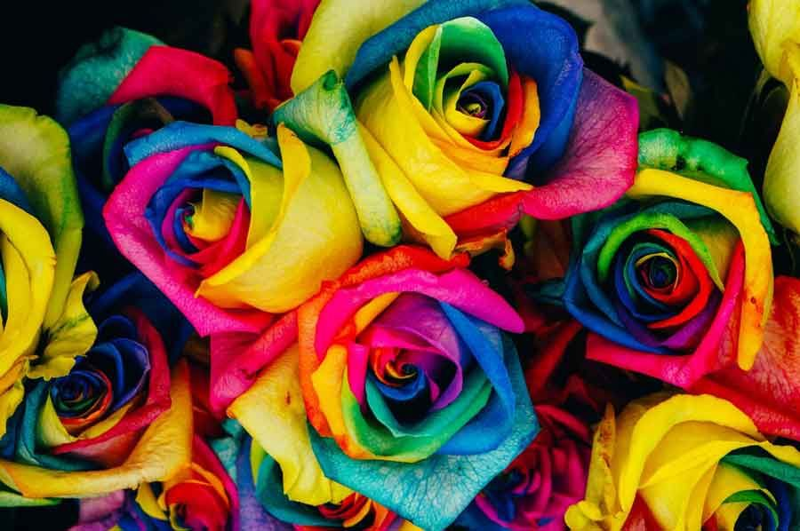 Gambar Bunga Mawar Terindah Gambar Bunga Matahari Mawar Sakura Anggrek Asoka Aster Dahlia Lavender Yang Indah Bagu Rainbow Roses Flower Photos Tie Dye Roses