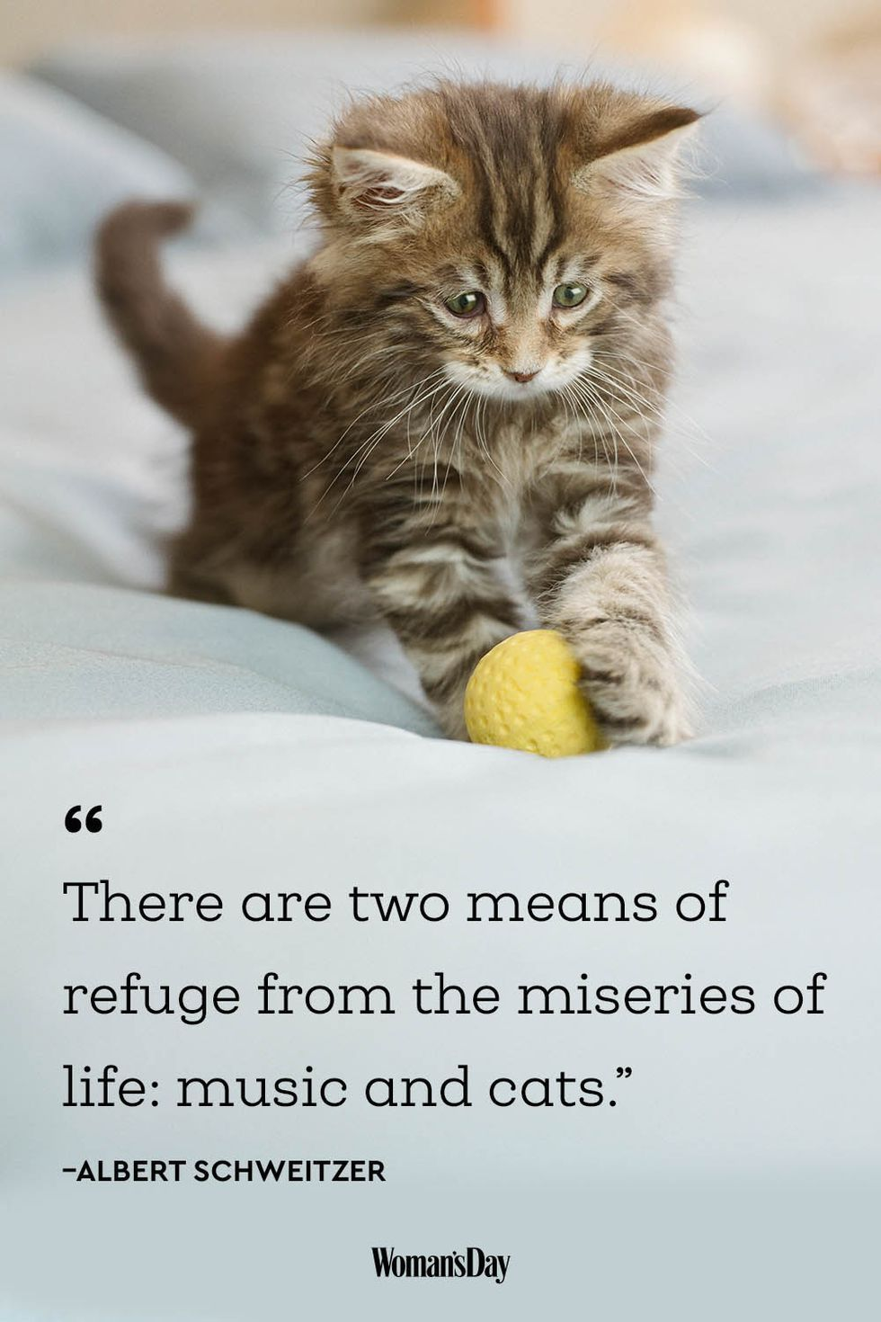 20 AdorableCat Quotes That Will Melt Your Heart Cat