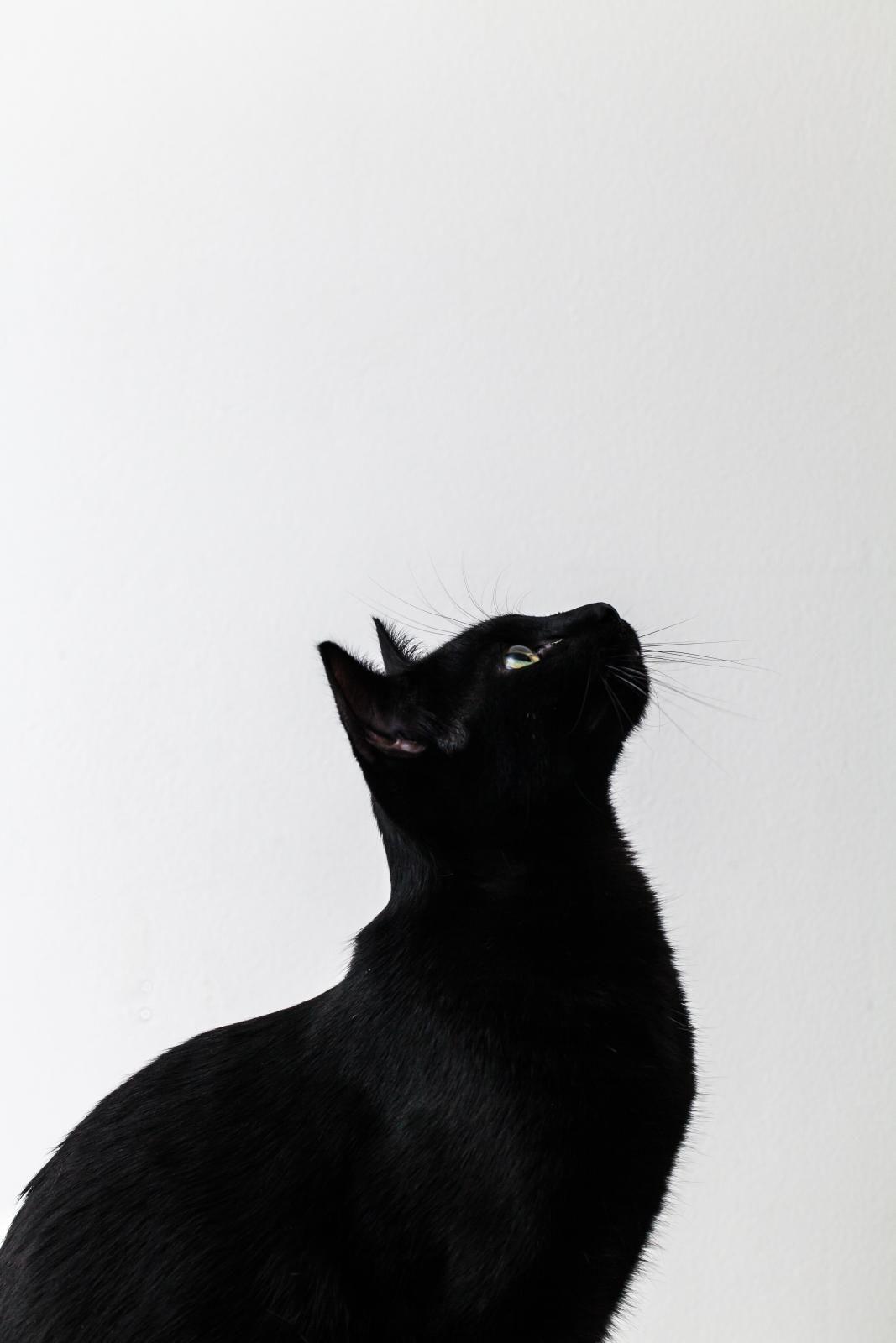 En smoking I | ♥ I Love Black Kitties ♥ | Cats, Cats ...