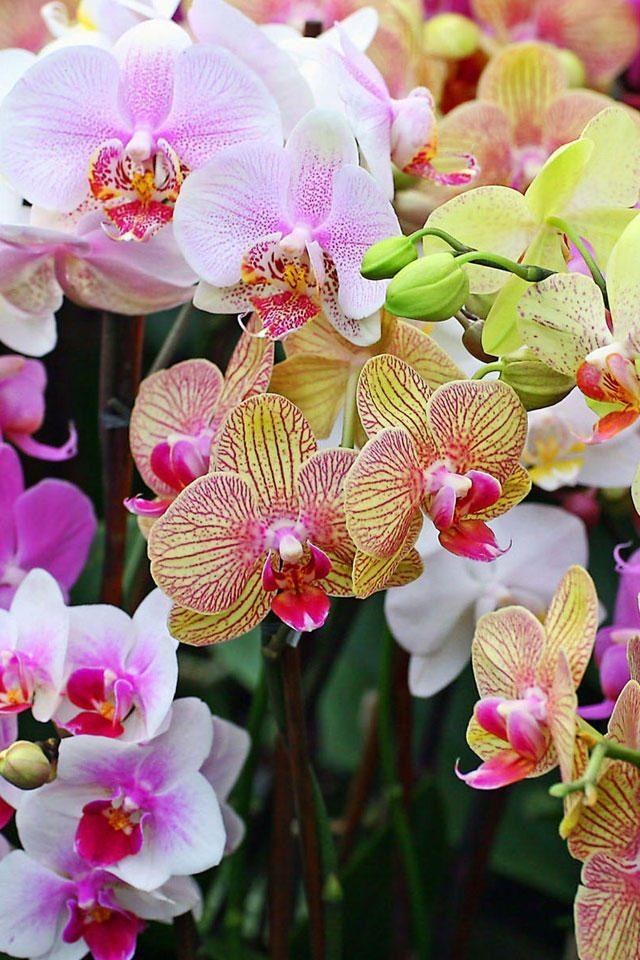 Orchids!!!!!
