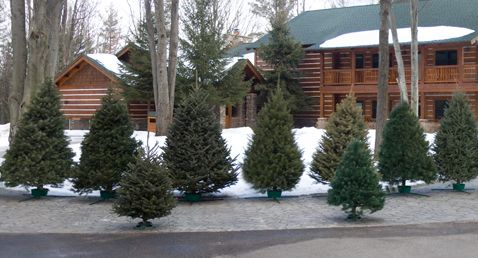 New Jersey Christmas Tree Growers Association Find Out Where To Get Your Tree This Year Christmas Tree Story