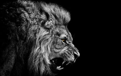 Fantasy Dark Lions Black And White Dark Animals Grayscale Yellow Eyes Lions Selective