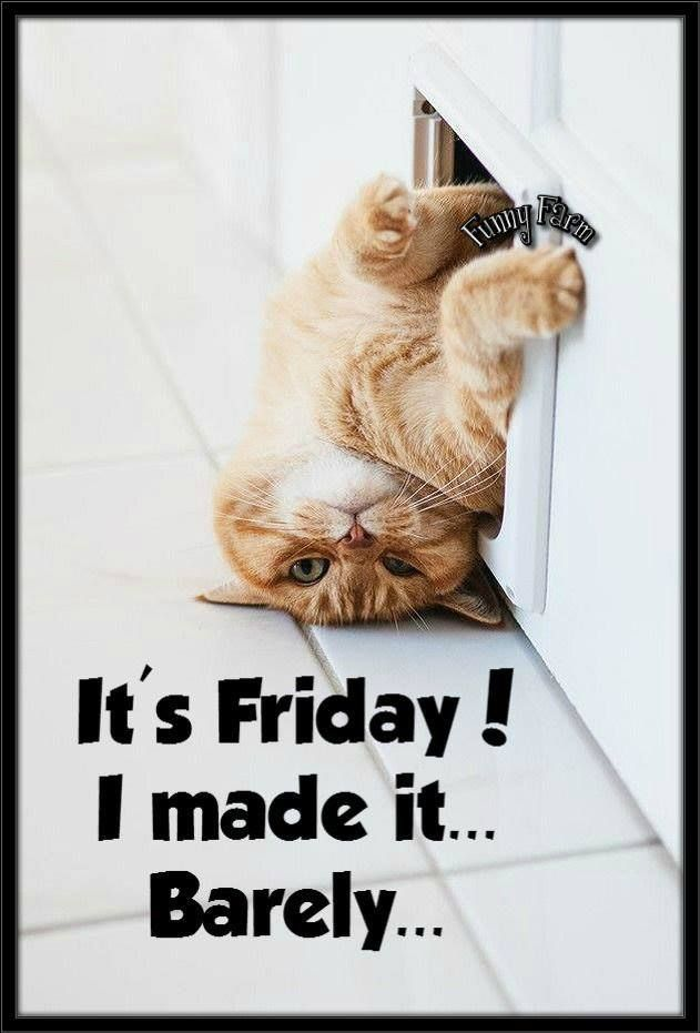Whew Happy Friday Makes Me Smile Funny Cats Silly Cats Funny