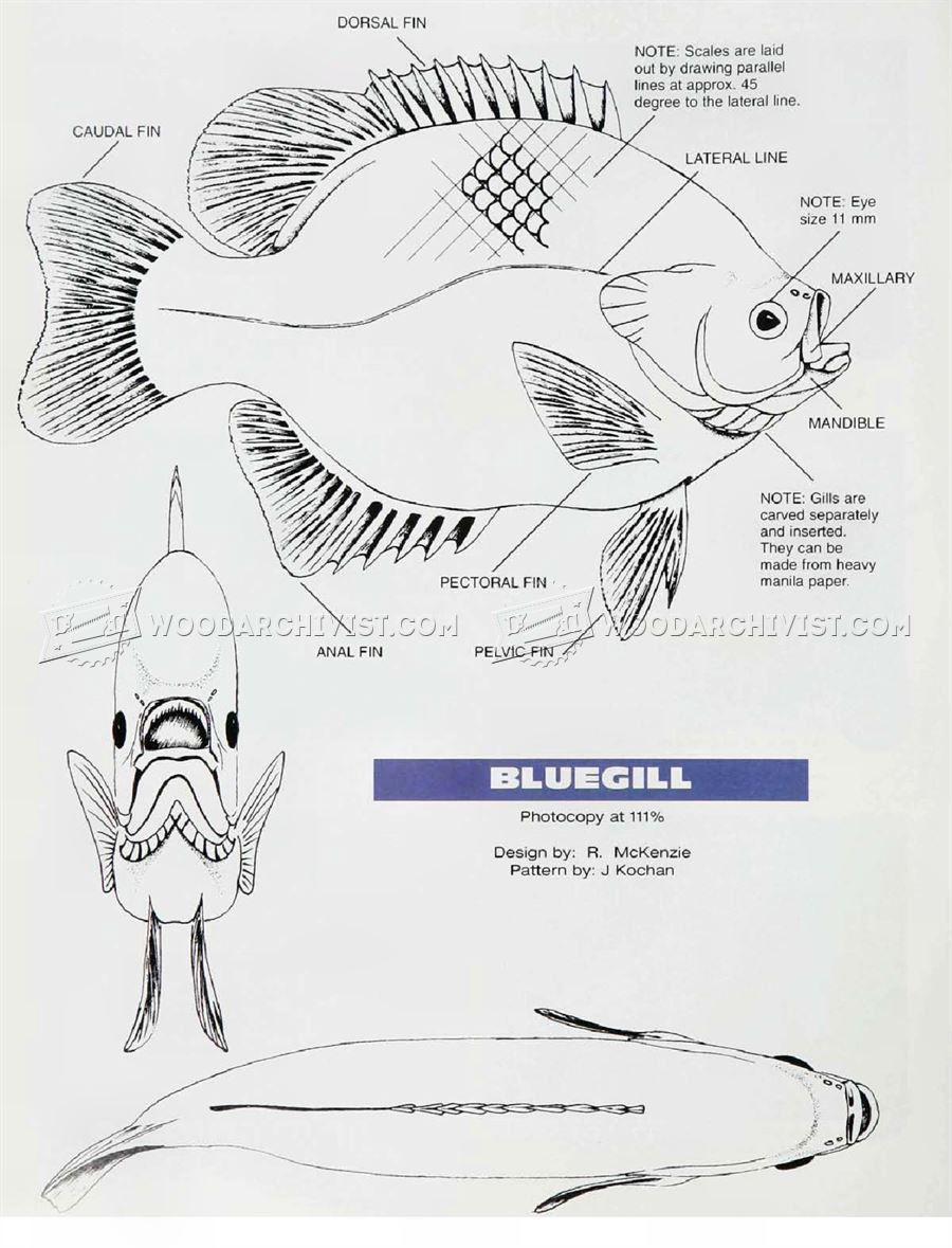 Bluegill carving wood patterns