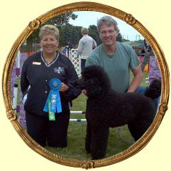 Female Standard Poodle Breeders With Images Poodle Puppies For