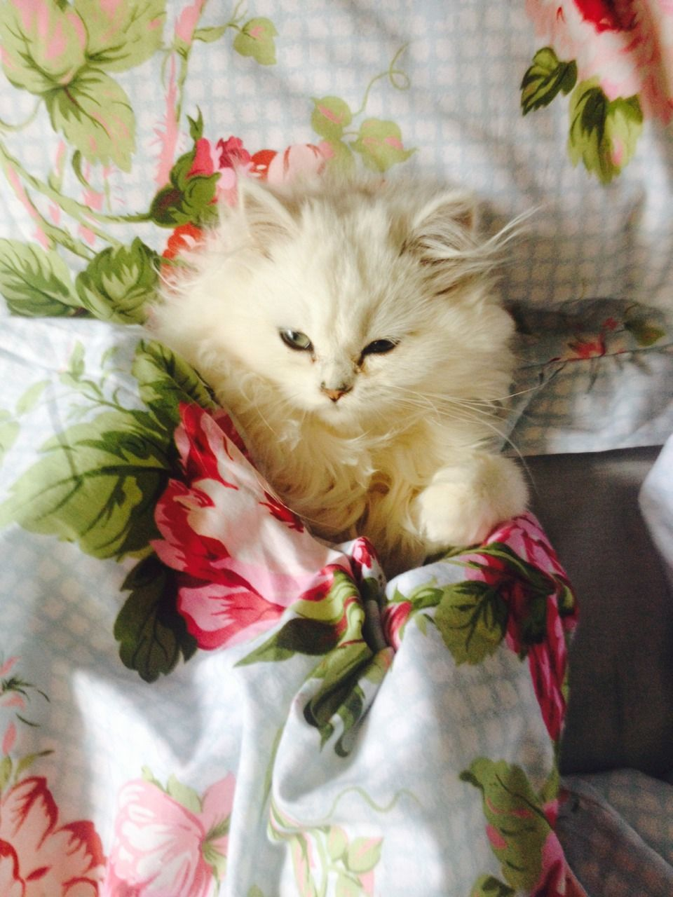 Pin by Callie Seim on fauna (With images) Kittens cutest