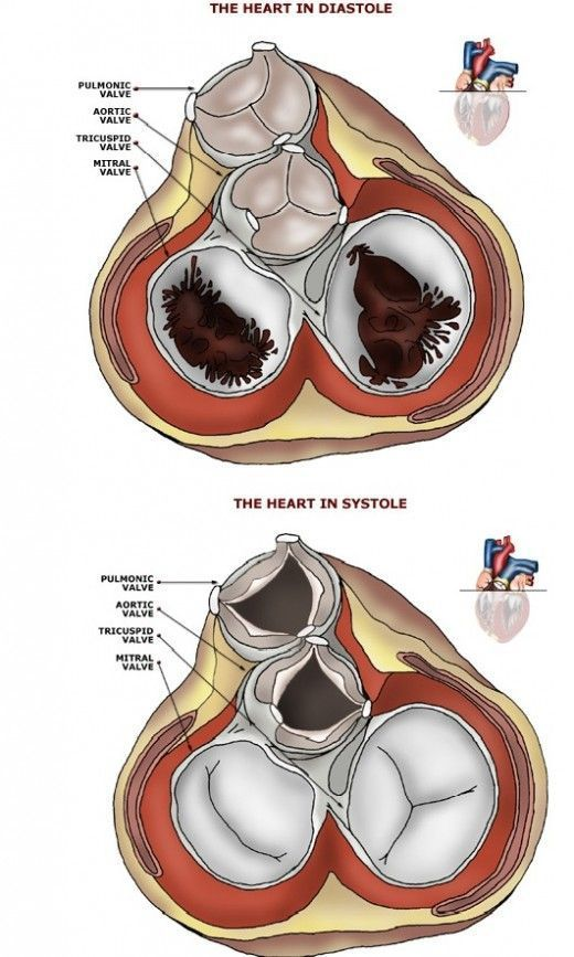 Anatomy Of The Heart Blood Flow Through The Heart And The Heart