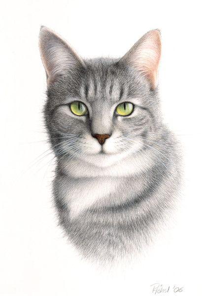 Katzenportrait Buntstift Katze Portrait Zeichnungen Tiere Zeichnen Tiere Malen Katzen Zeichnungen