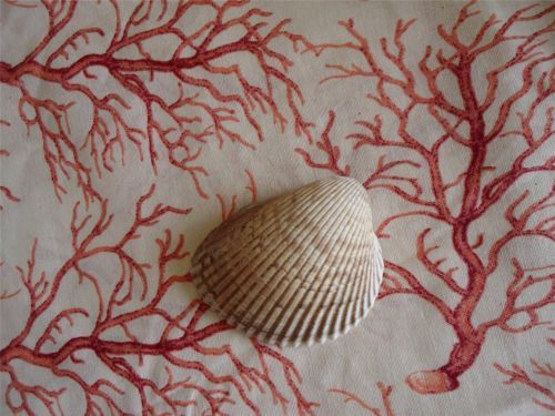 Coastal Tablecloth Coral Shell Cream RAYMOND WAITES Beach Decor Seashell  ROUND