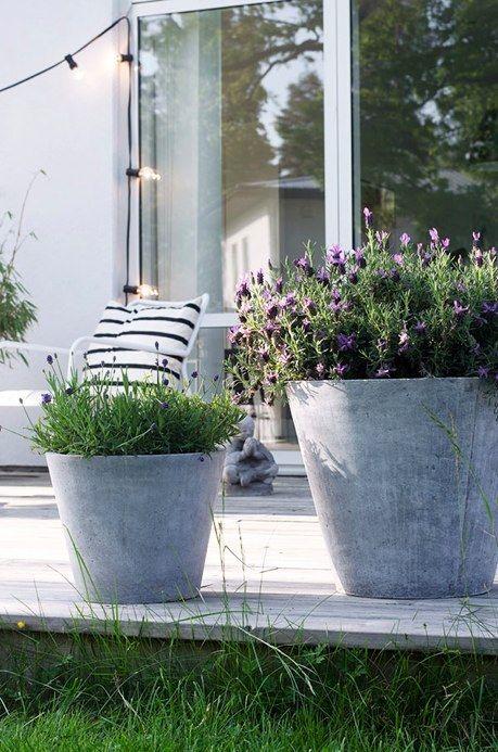 2013年07月11日のブログ| Still Life Garden Pots Pinterest