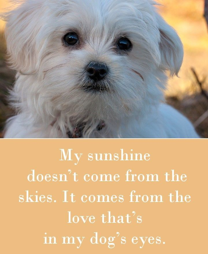42 Dog Sayings Which Will Touch Your Heart Dog Quotes Dogs