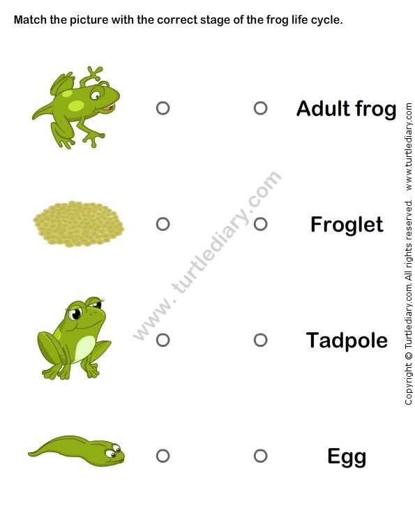 Frog Life Cycle Worksheet1 | Natuur: Dieren | Pinterest