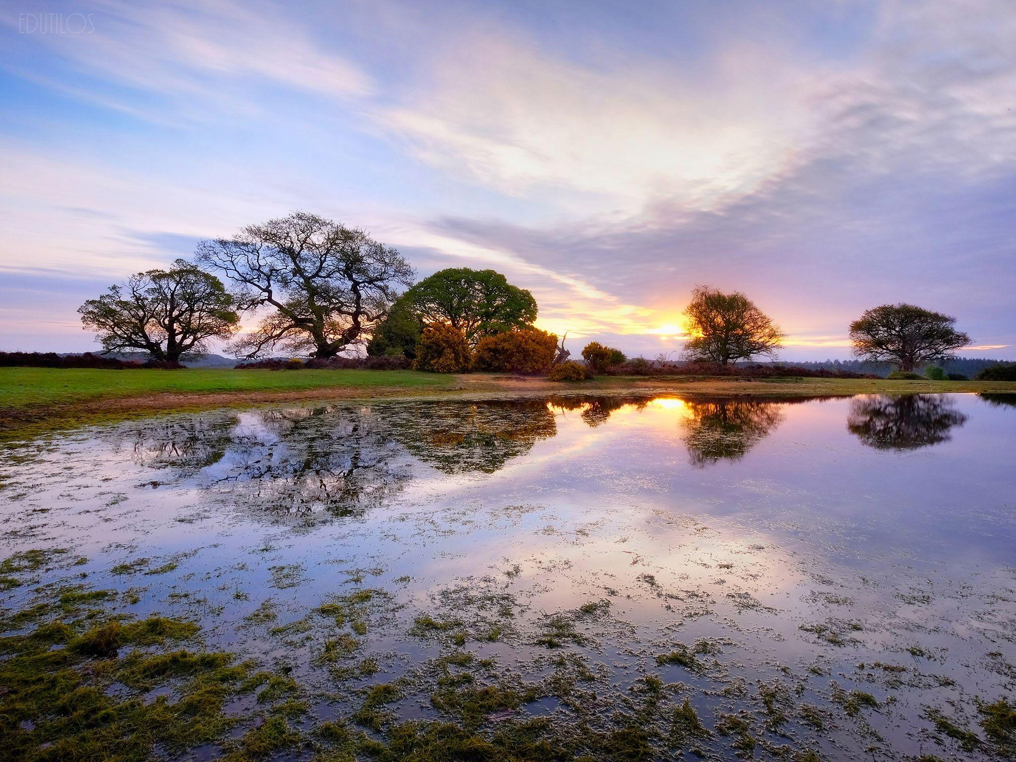 Silent Partners Mogshade Pond New Forest Uk Beautiful Landscapes Landscape Photography Landscape