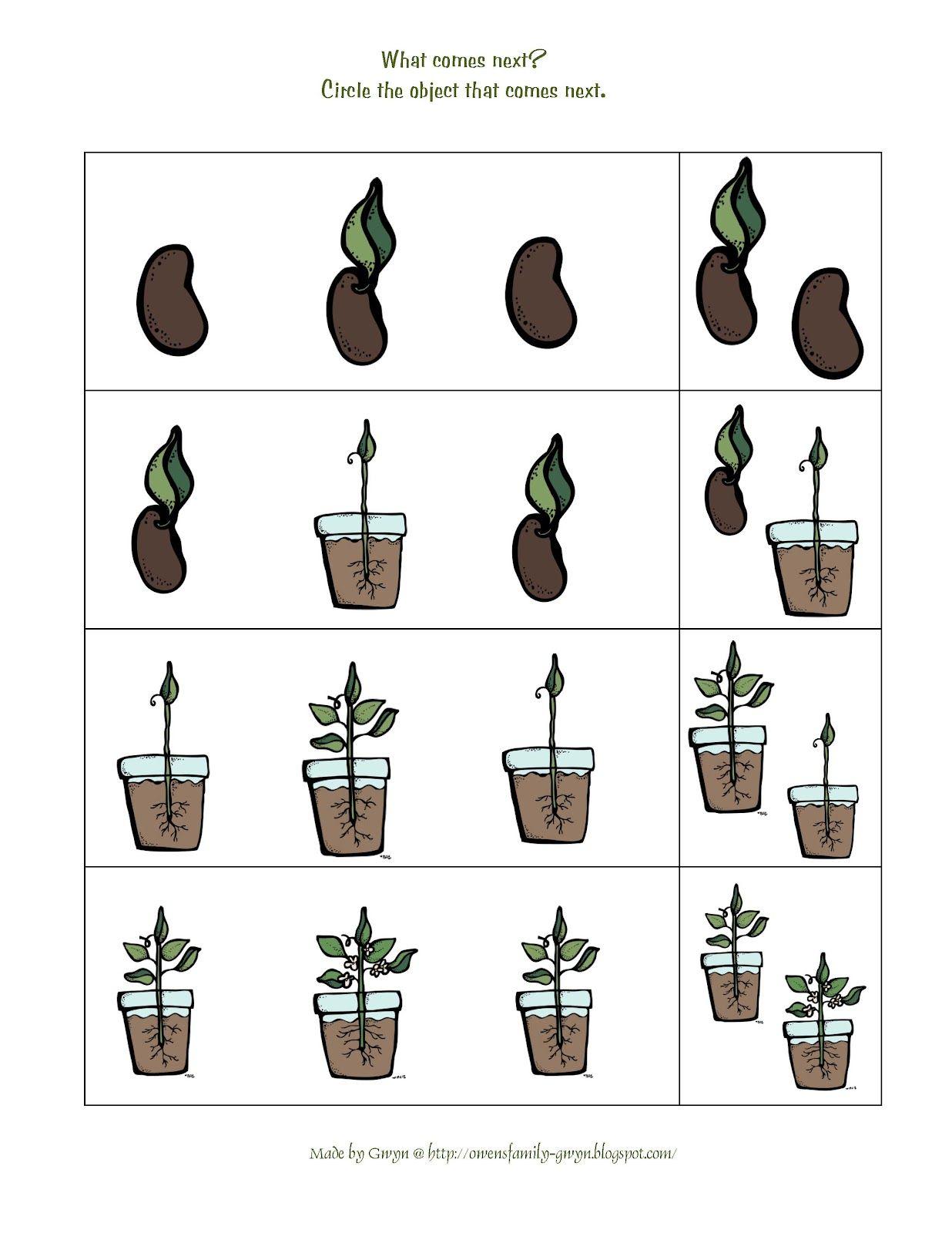 Preschool Printables Plant Life Cycle
