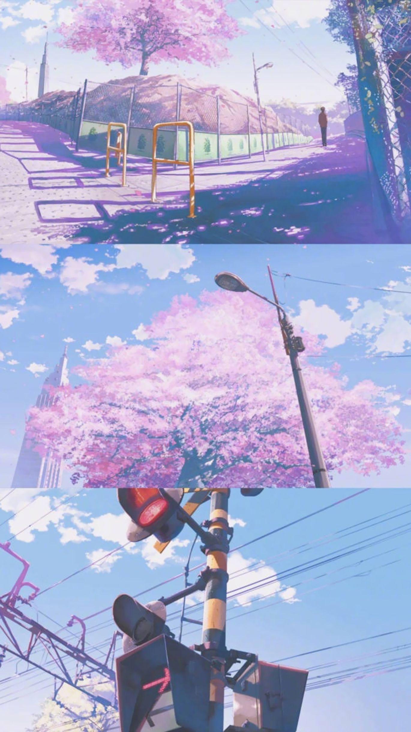 Cherry Blossoms Wallpaper Anime Scenery Wallpaper Anime Backgrounds Wallpapers Anime Scenery