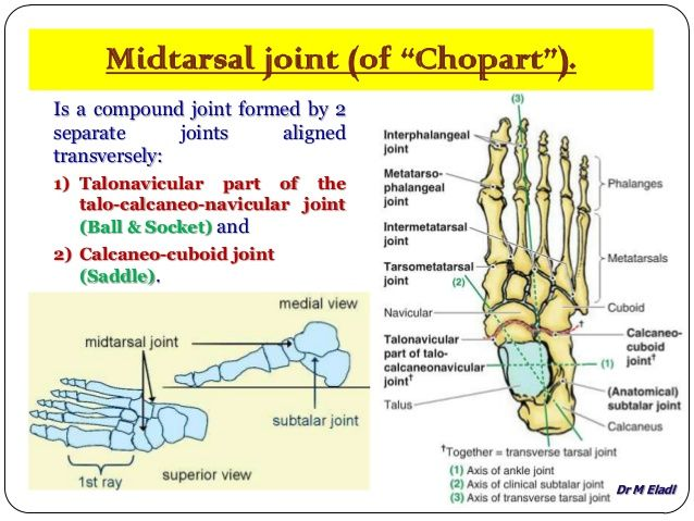 Pin By Jessica On Science Anatomy And Physiology Physiology Joints Of The Foot
