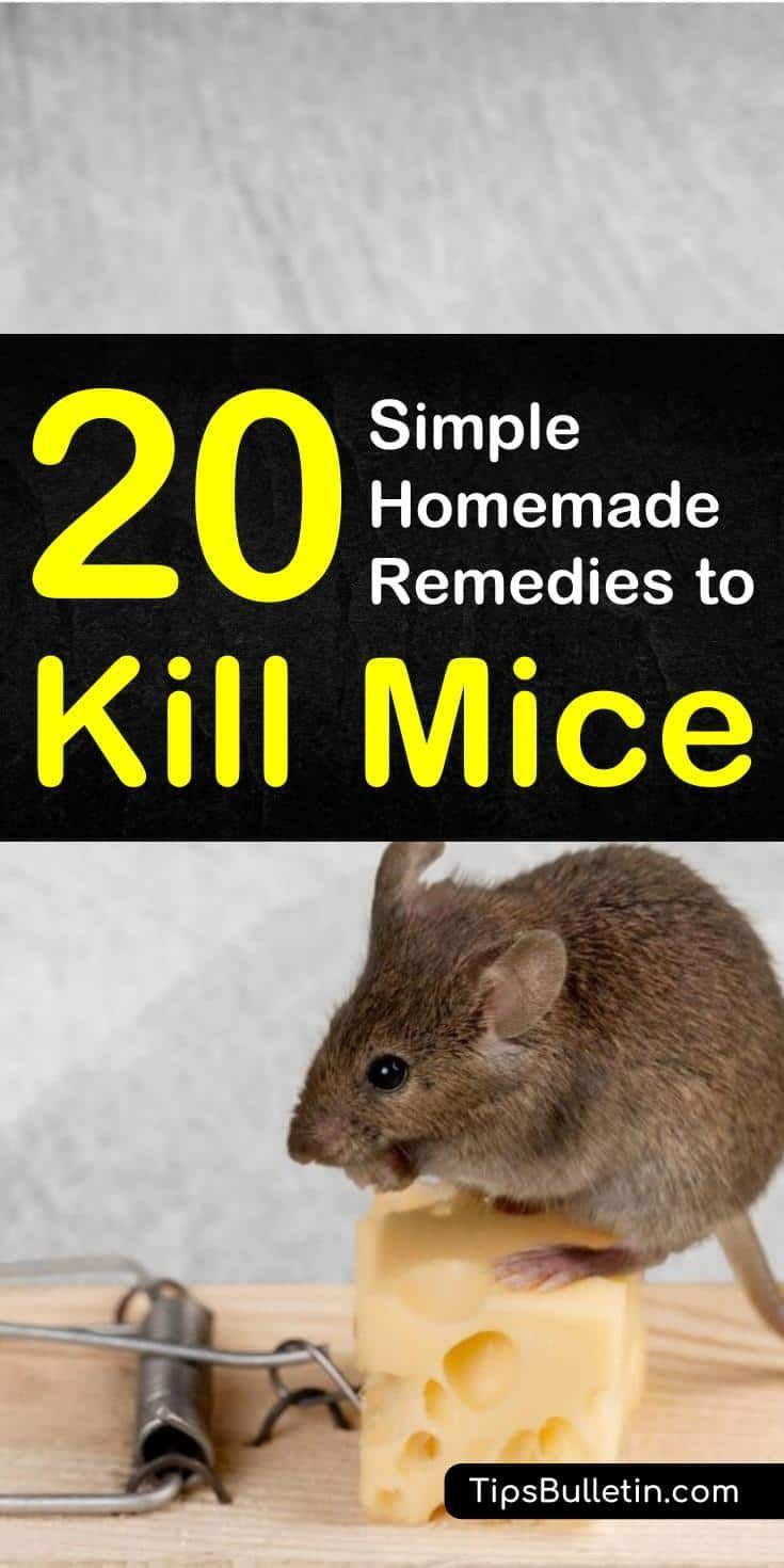 20 Simple Homemade Remedies To Kill Mice (With Images