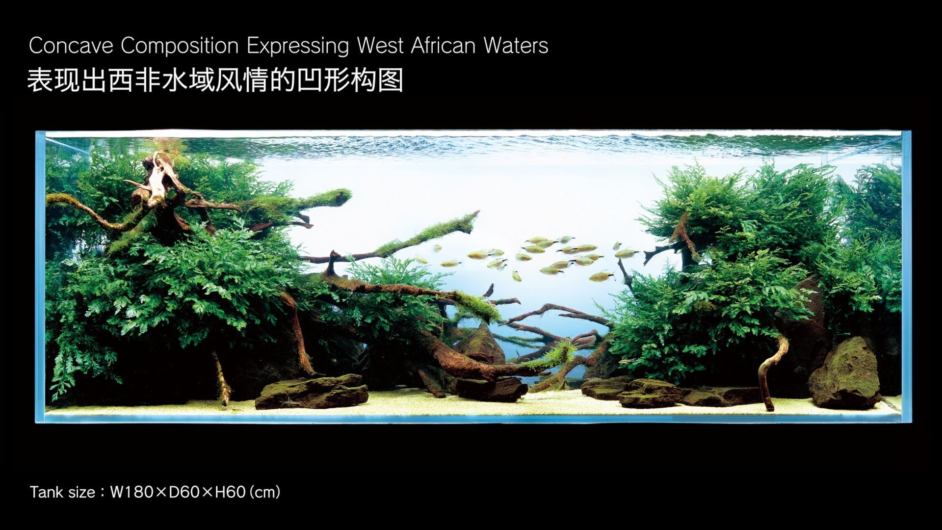 [ADAview] Aquarium Layout: Concave Composition Expressing West African  Waters(EN/CN Subs)