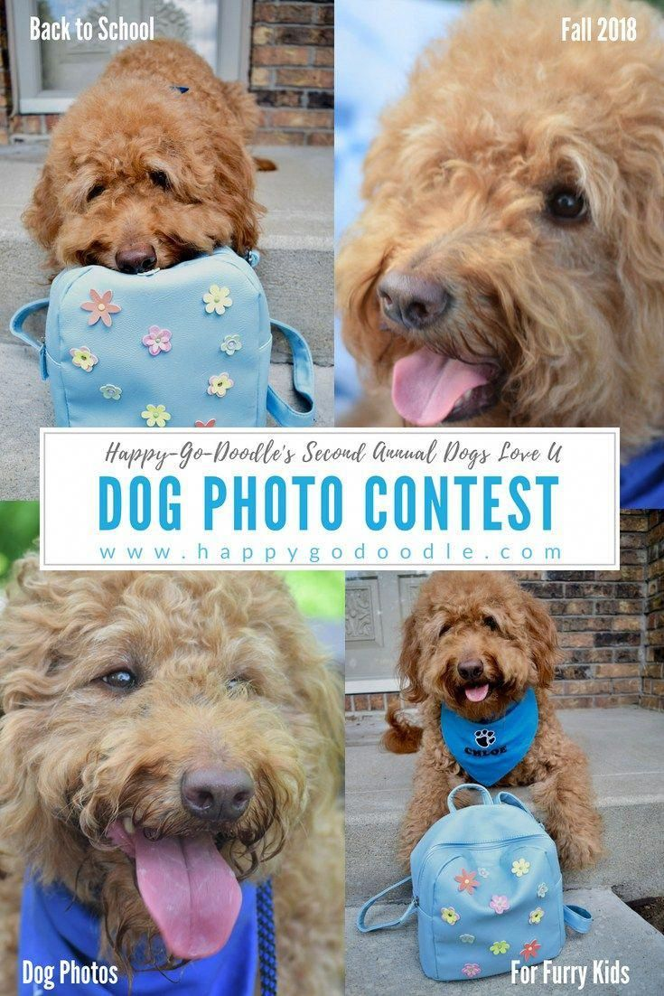 Dog photo contest to kick off the 2018 school year