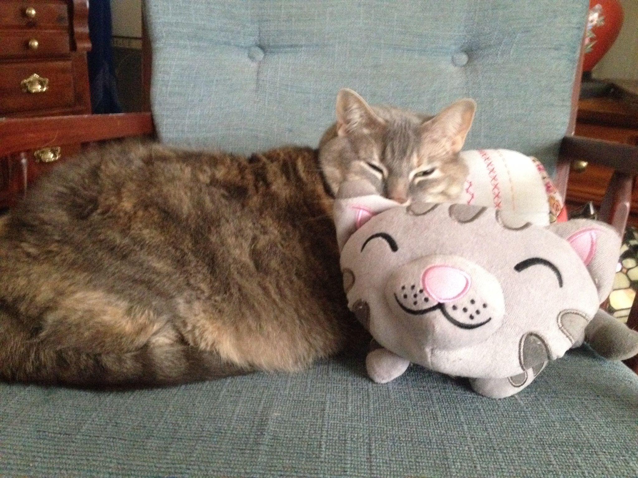 KittyBoo having a soft kitty kinda day