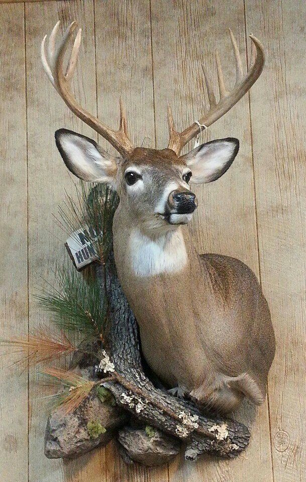 Jersey Whitetail Habitat Deer Head Decor Deer Hunting Decor Deer Mount Decor