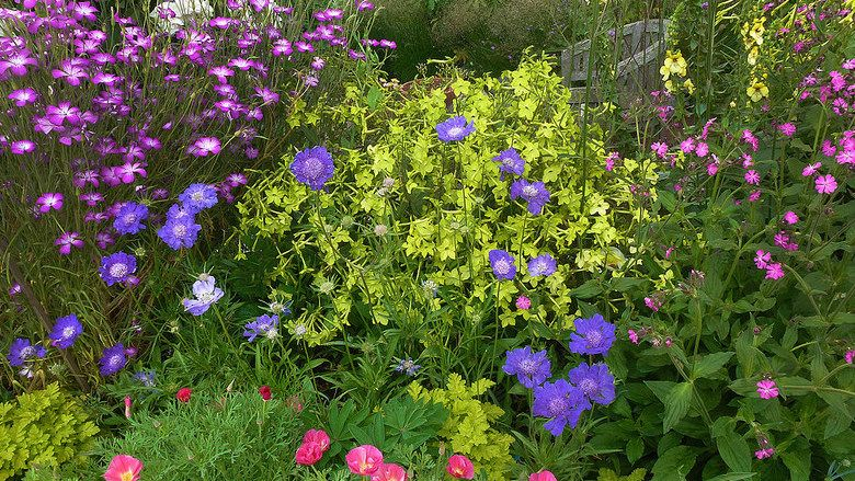 Annie S Annuals And Perennials Retail Online Nursery Plants Flowers